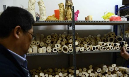At Last China Finaly to set date to close Ivory Factories